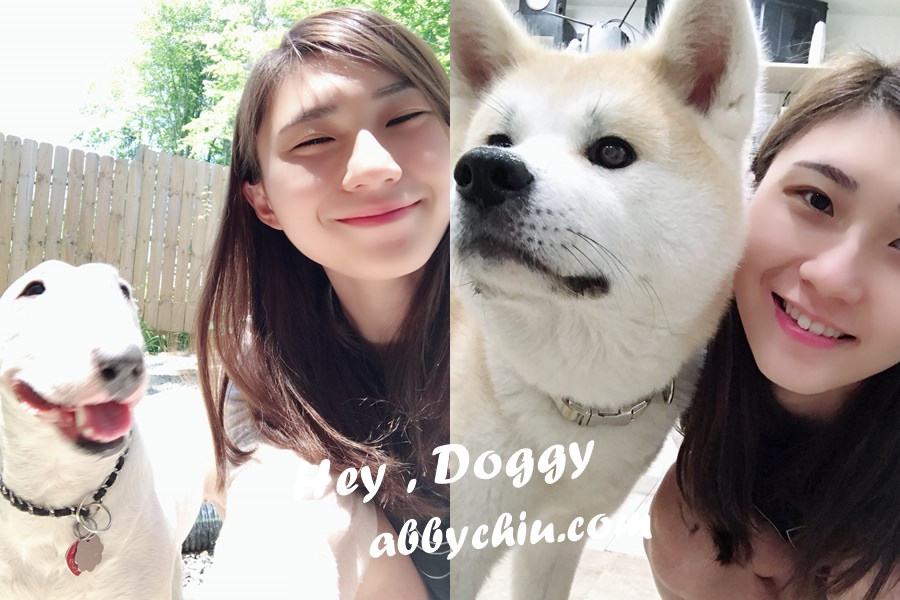 美國 | 華盛頓交流計畫 ♥ 流浪狗志工之行 volunteer for Stray dog in DC